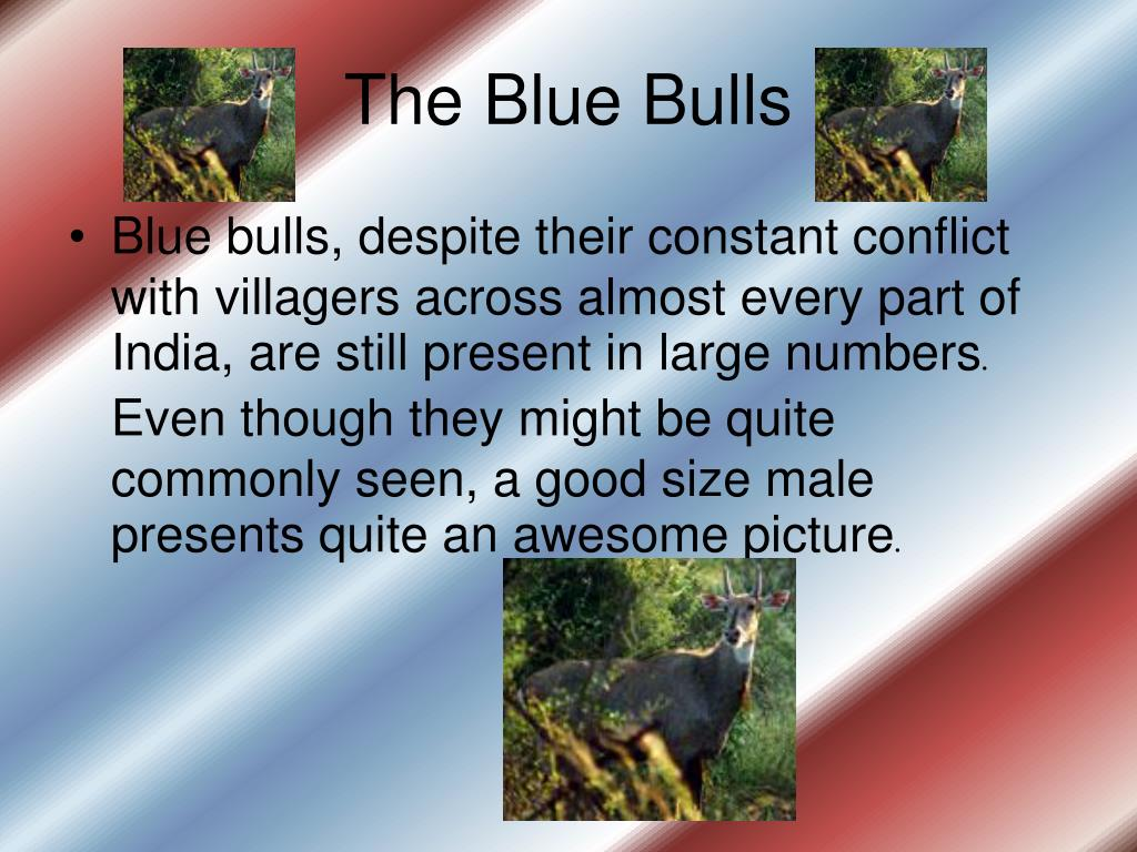 The Blue Bulls