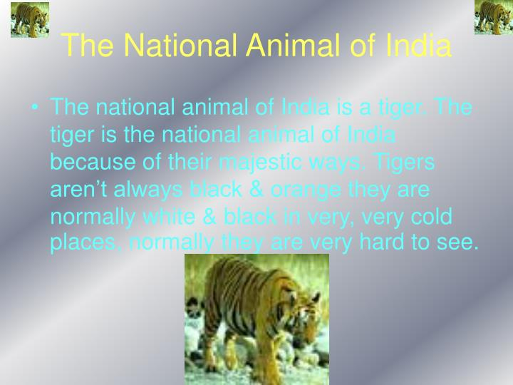 The national animal of india
