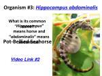 organism 3 hippocampus abdominalis
