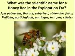what was the scientific name for a honey bee in the exploration era