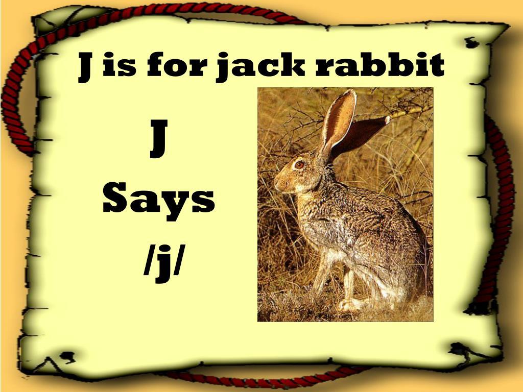 J is for jack rabbit