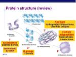 protein structure review