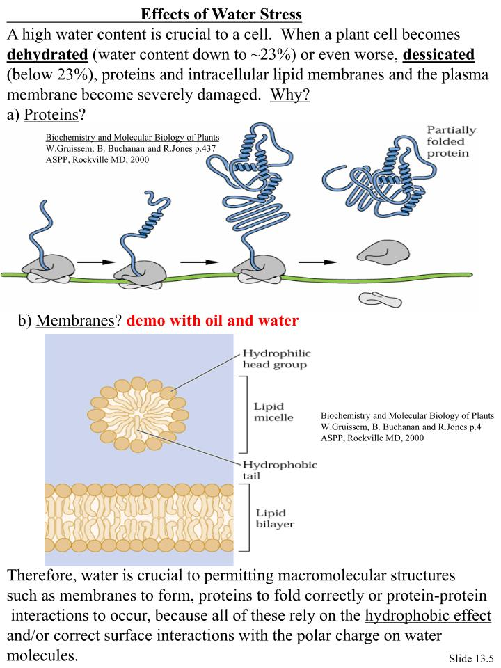 Effects of Water Stress