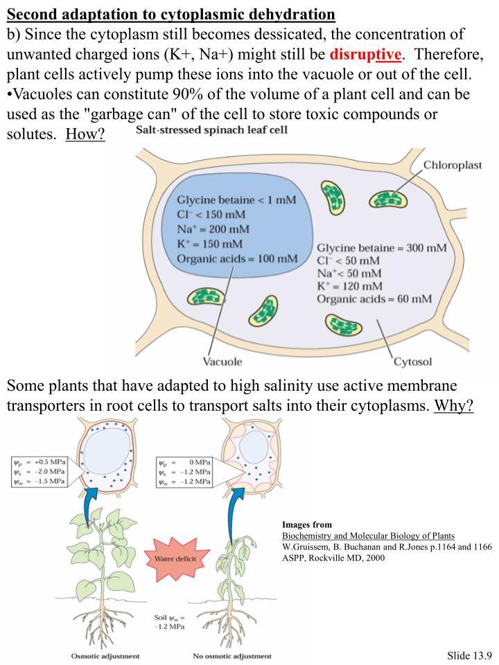 Second adaptation to cytoplasmic dehydration