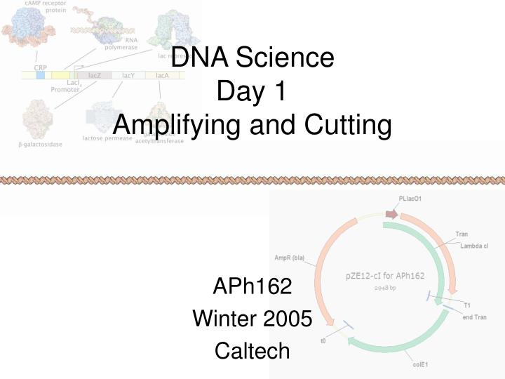 dna science day 1 amplifying and cutting n.