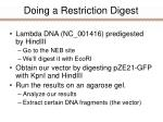 doing a restriction digest