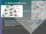 3 bone architecture