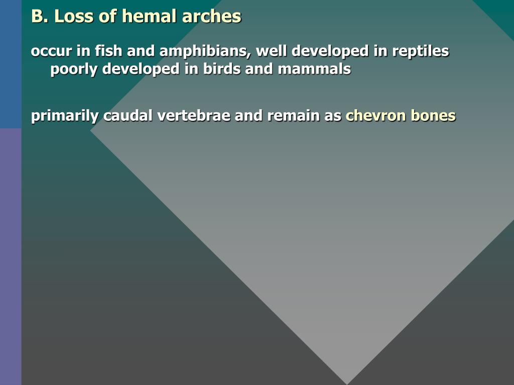B. Loss of hemal arches