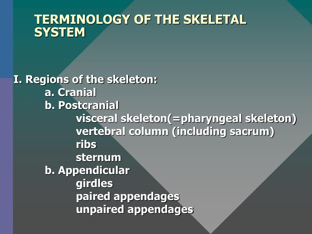 TERMINOLOGY OF THE SKELETAL SYSTEM