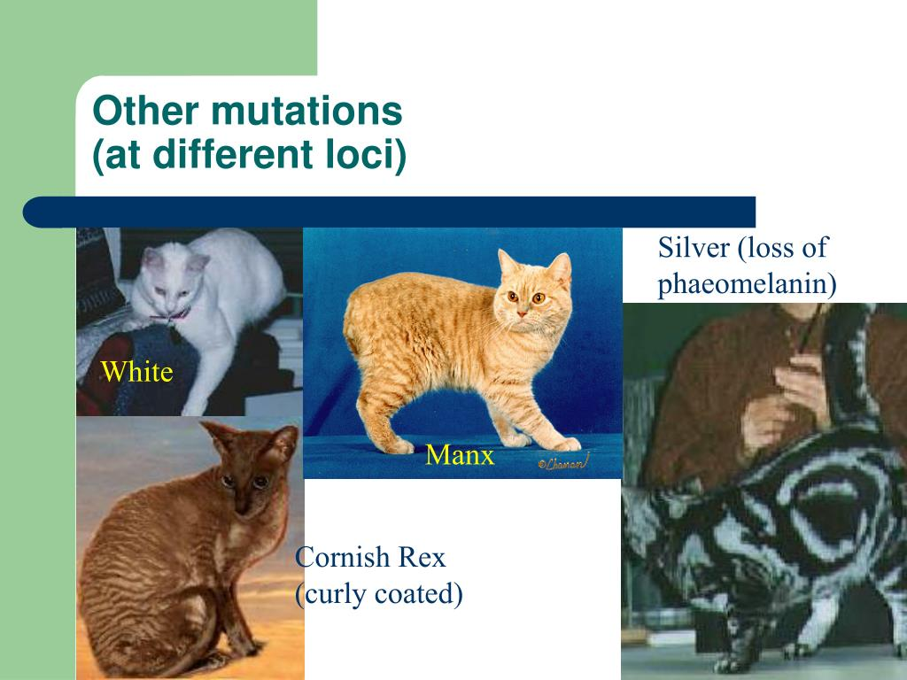 Other mutations