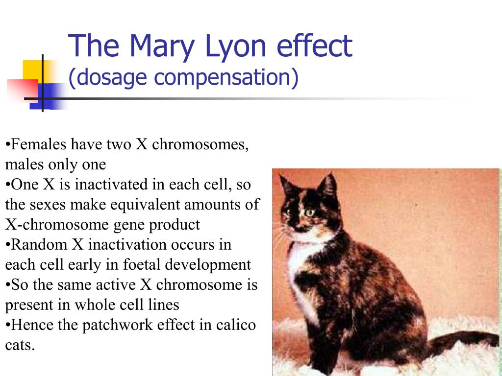 The Mary Lyon effect