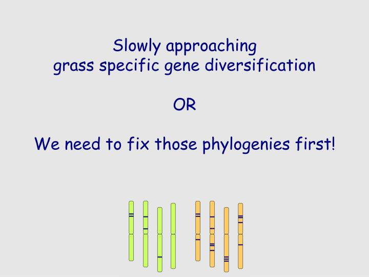 slowly approaching grass specific gene diversification or we need to fix those phylogenies first n.