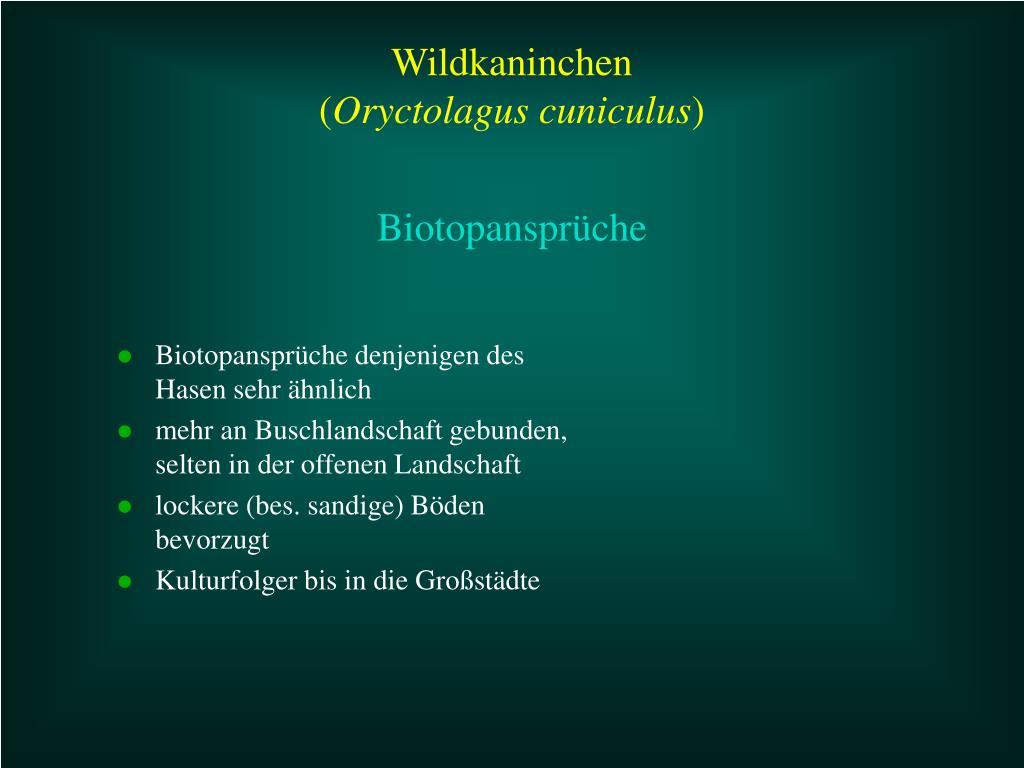 Biotopansprüche denjenigen des Hasen sehr ähnlich
