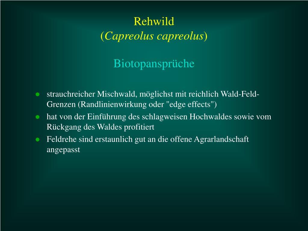 """strauchreicher Mischwald, möglichst mit reichlich Wald-Feld-Grenzen (Randlinienwirkung oder """"edge effects"""")"""