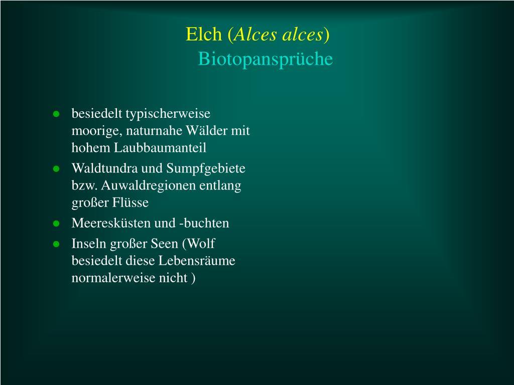 Elch (