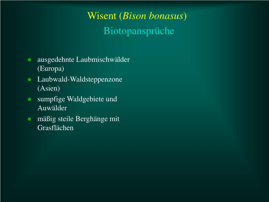 Wisent (