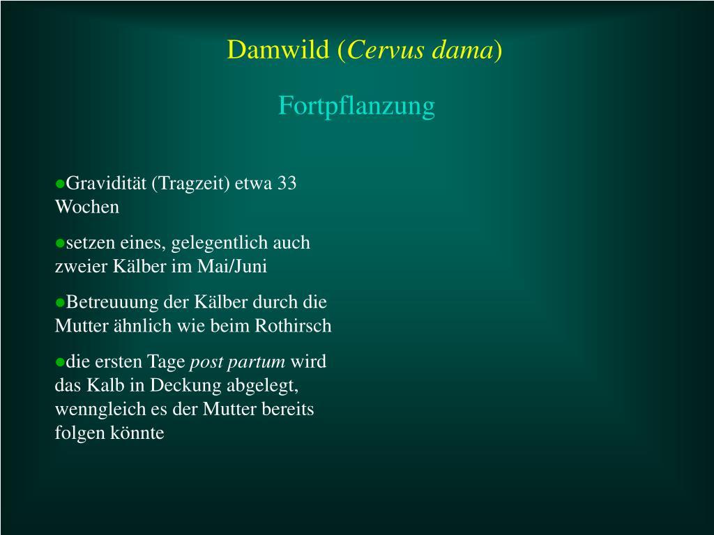 Damwild (