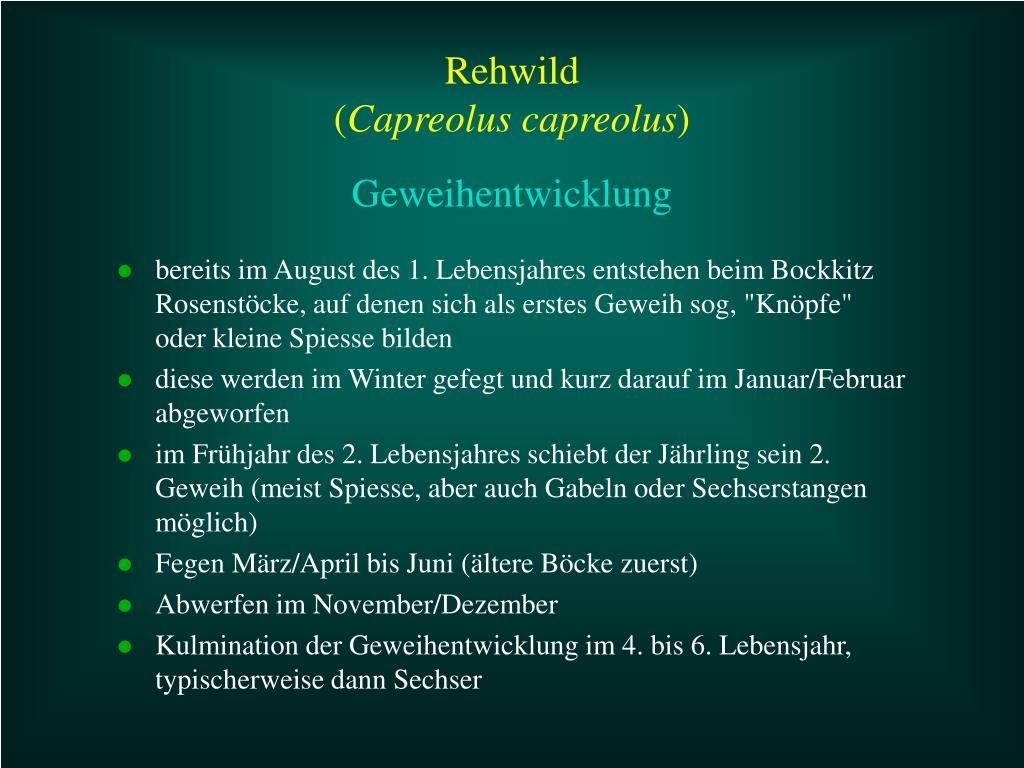 """bereits im August des 1. Lebensjahres entstehen beim Bockkitz Rosenstöcke, auf denen sich als erstes Geweih sog, """"Knöpfe"""" oder kleine Spiesse bilden"""