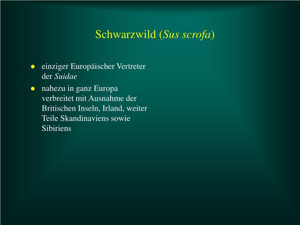 Schwarzwild (