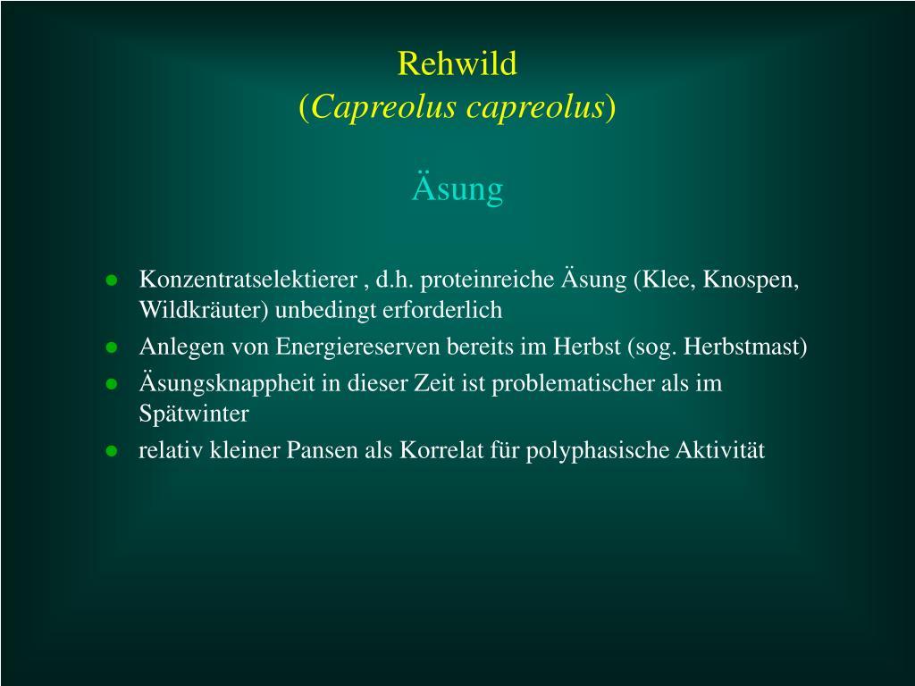 Konzentratselektierer , d.h. proteinreiche Äsung (Klee, Knospen, Wildkräuter) unbedingt erforderlich
