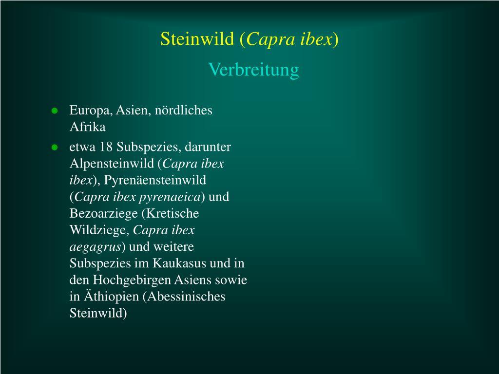 Steinwild (