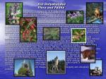 ilc gulyakandoz flora and fauna