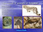 rare kinds of animals of tajikistan