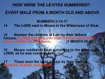 how were the levites numbered