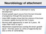 neurobiology of attachment