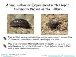 animal behavior experiment with isopod commonly known as the pillbug