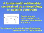 a fundamental relationship constrained by a morphology specific constraint