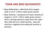 tdwr and bird movements