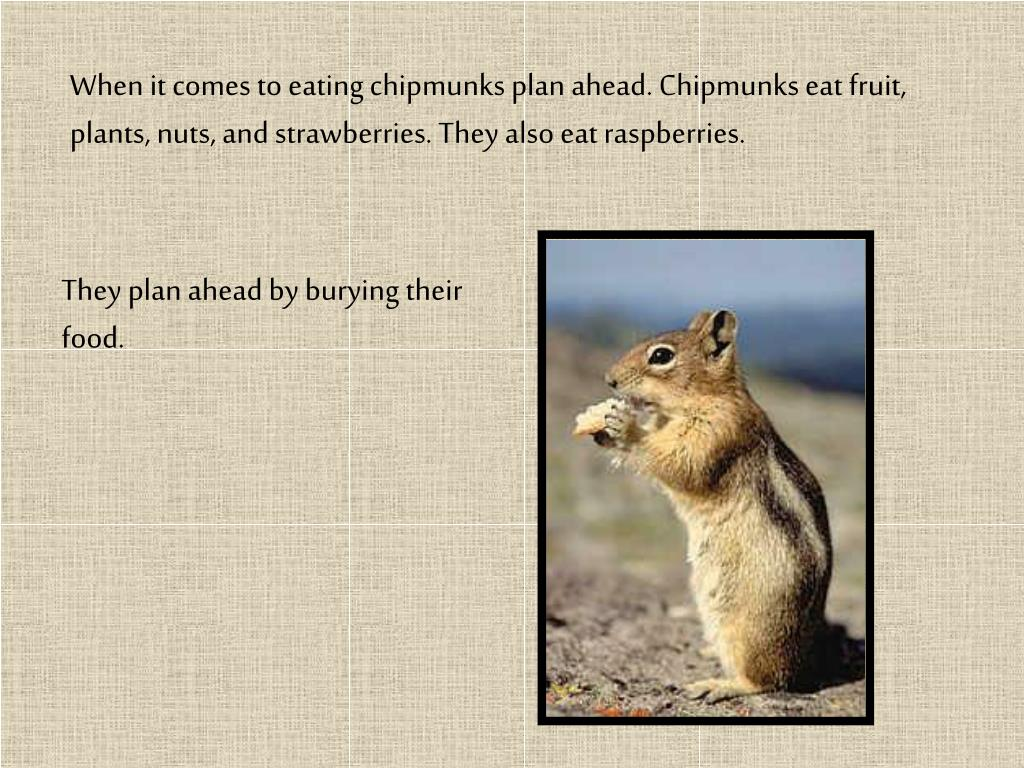When it comes to eating chipmunks plan ahead. Chipmunks eat fruit, plants, nuts, and strawberries. They also eat raspberries.