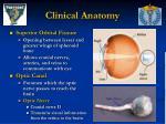 clinical anatomy4