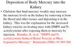 deposition of body mercury into the kidney