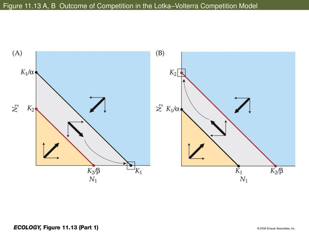 Figure 11.13 A, B  Outcome of Competition in the Lotka–Volterra Competition Model