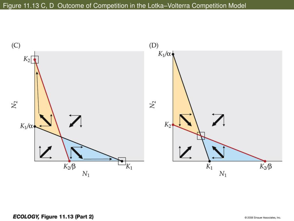 Figure 11.13 C, D  Outcome of Competition in the Lotka–Volterra Competition Model