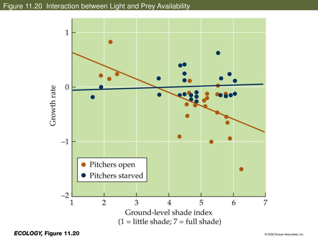 Figure 11.20  Interaction between Light and Prey Availability