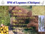 ipm of legumes chickpea