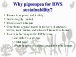 why pigeonpea for rws sustainability