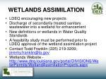 wetlands assimilation