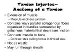 tendon injuries anatomy of a tendon