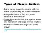 types of muscle actions