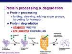 protein processing degradation
