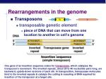 rearrangements in the genome