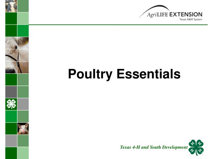 poultry essentials n.