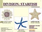 division starfish