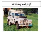 a heavy old pig
