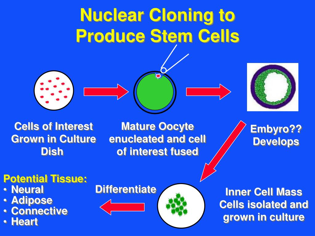 Nuclear Cloning to