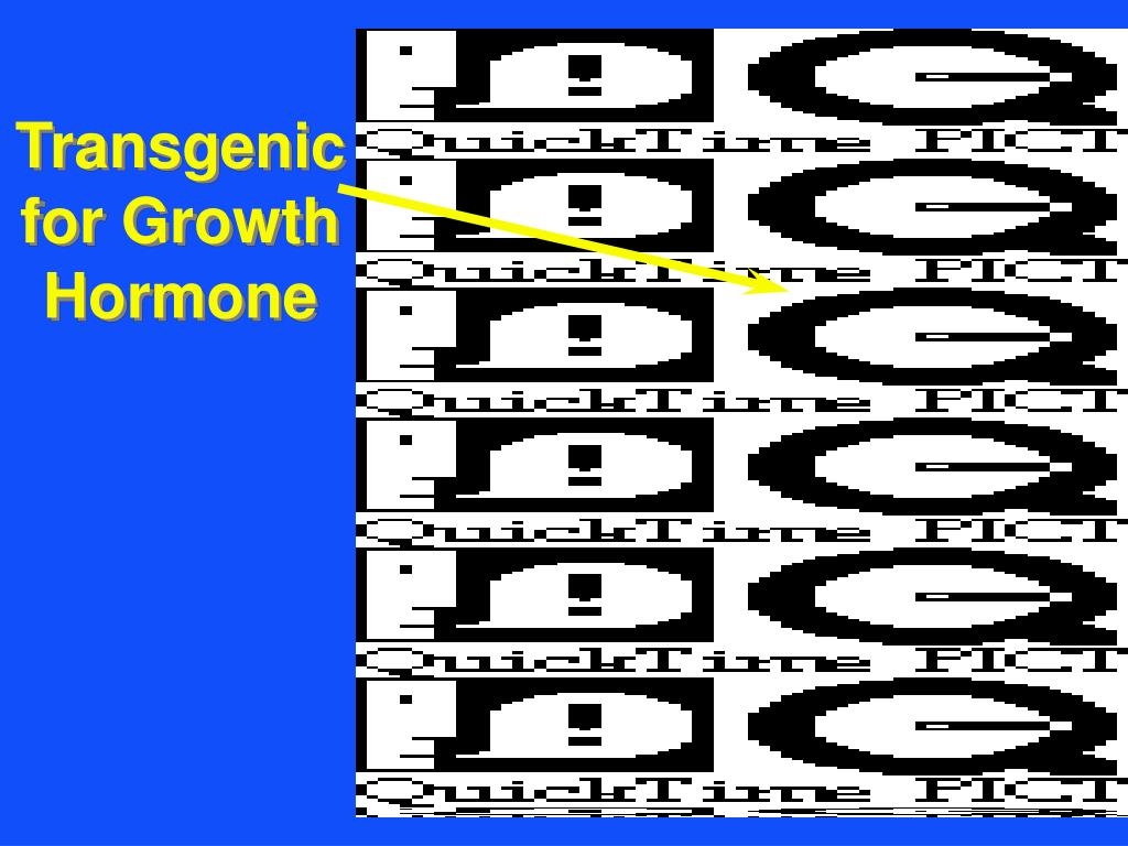 Transgenic for Growth Hormone